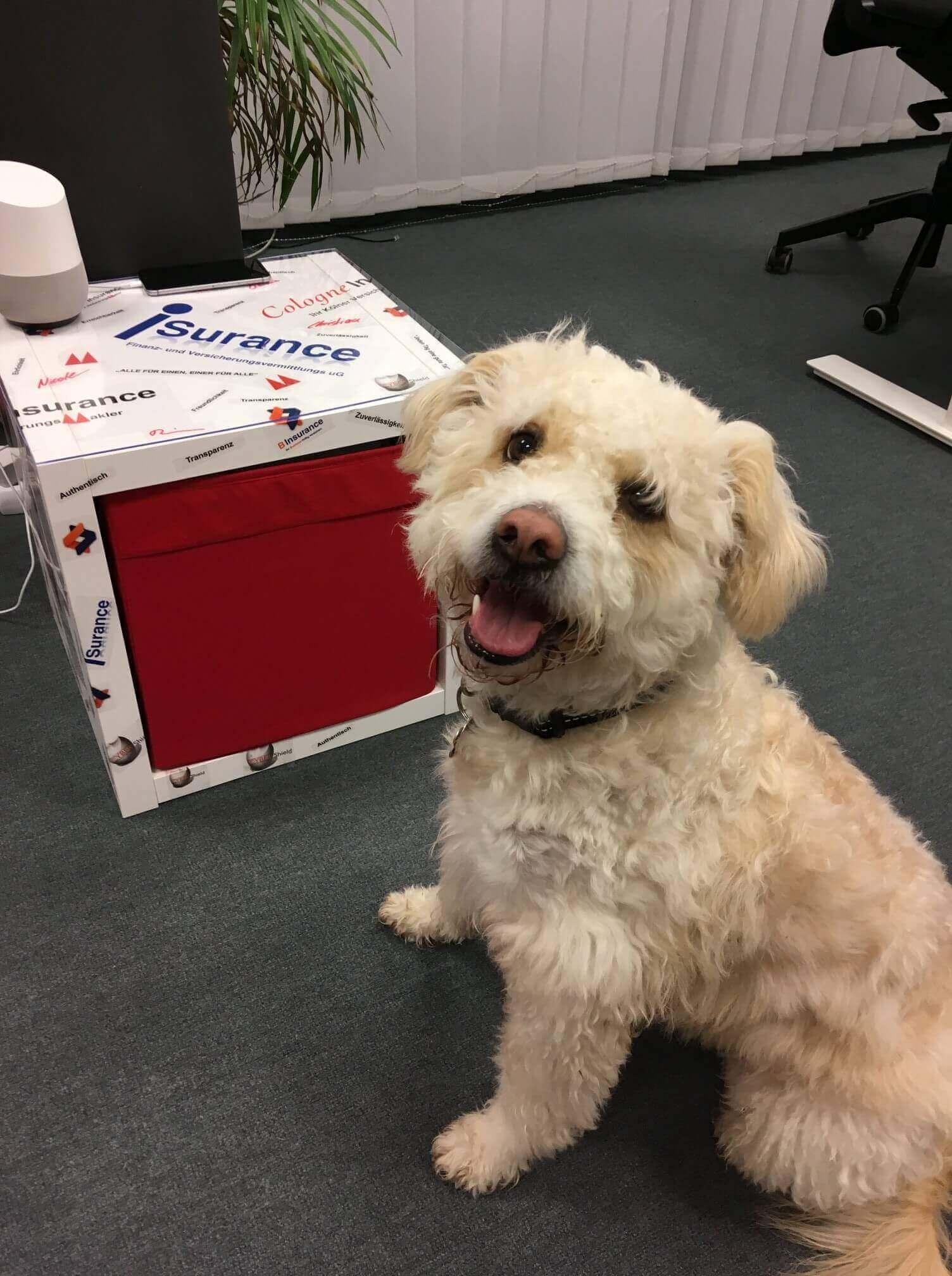 Bürohund Leon